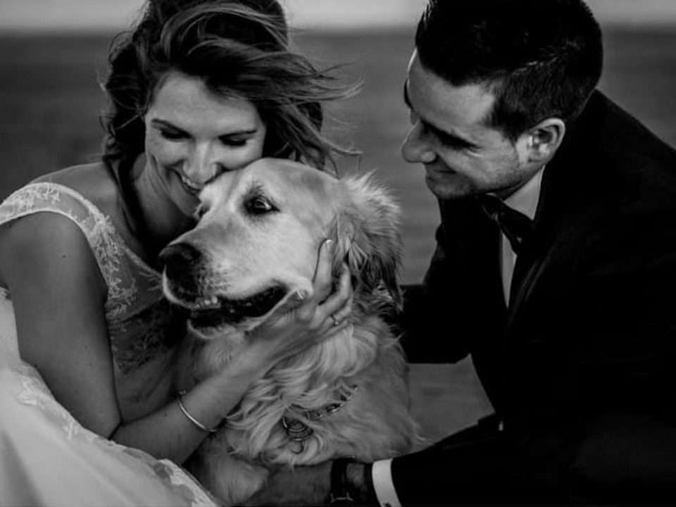 dogwedding, dogs bodas , wedding , cute , weddinginspiration
